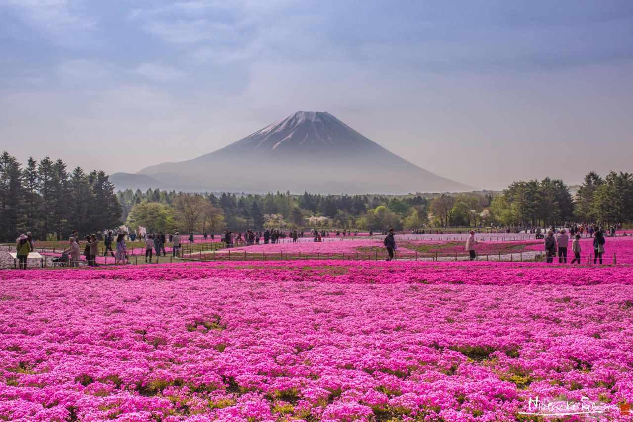 Main_Mount Fuji Dressed-Up_for press.jpg
